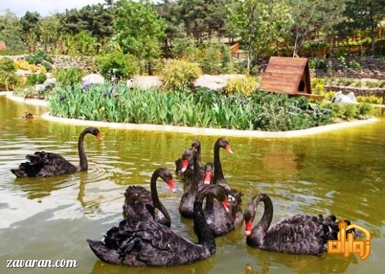 باغ پرندگان در مشهد